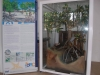 Mangrove 3D Model & X banner