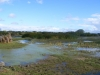 wetlands-in-pereybere-again