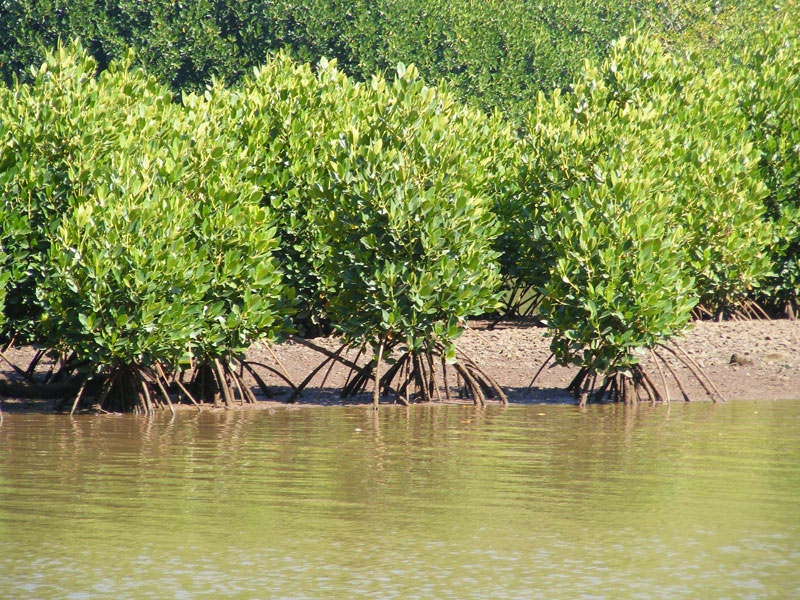 taking a look at mangroves Have you always wanted to try kayaking, but felt intimidated because you're a complete beginner and worried it might be difficult me, too the yanbaru mangrove in okinawa is a fun and safe place to go if you want to experience kayaking in japan.