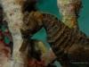 seahorse-copyright-eugene-vitry