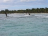 waterskiing-over-seagrass-beds-threatens-them